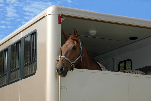 Travelling Problems in Horses - Symptoms, Causes, Diagnosis, Treatment, Recovery, Management, Cost