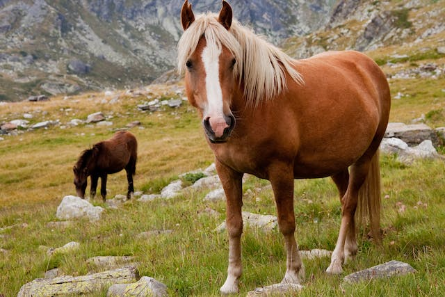 Valerian Allergy in Horses - Symptoms, Causes, Diagnosis, Treatment, Recovery, Management, Cost