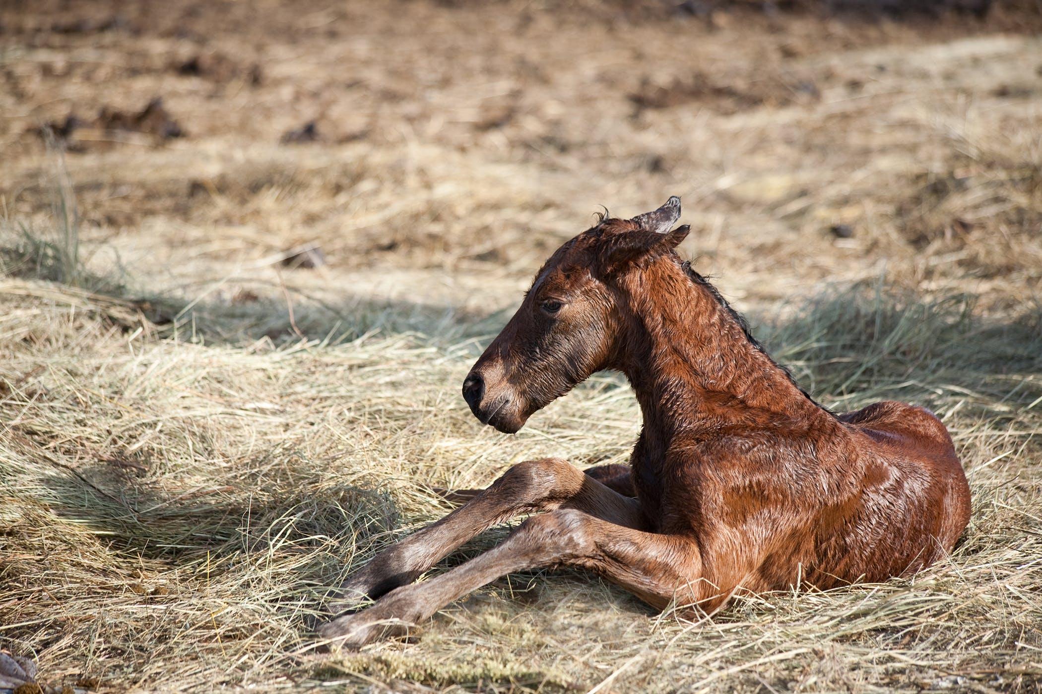 Viral Diarrhea  Foals  In Horses