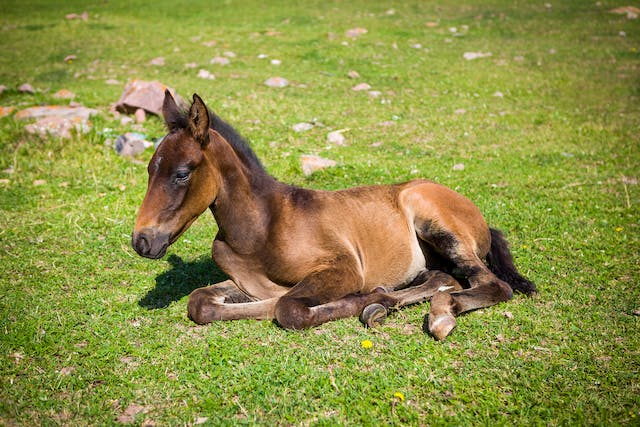 Vitamin E Deficiency in Horses - Symptoms, Causes, Diagnosis, Treatment, Recovery, Management, Cost