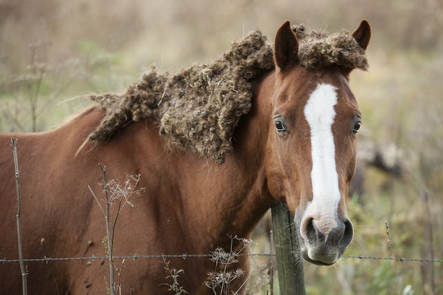 Warts in Horses - Symptoms, Causes, Diagnosis, Treatment, Recovery, Management, Cost