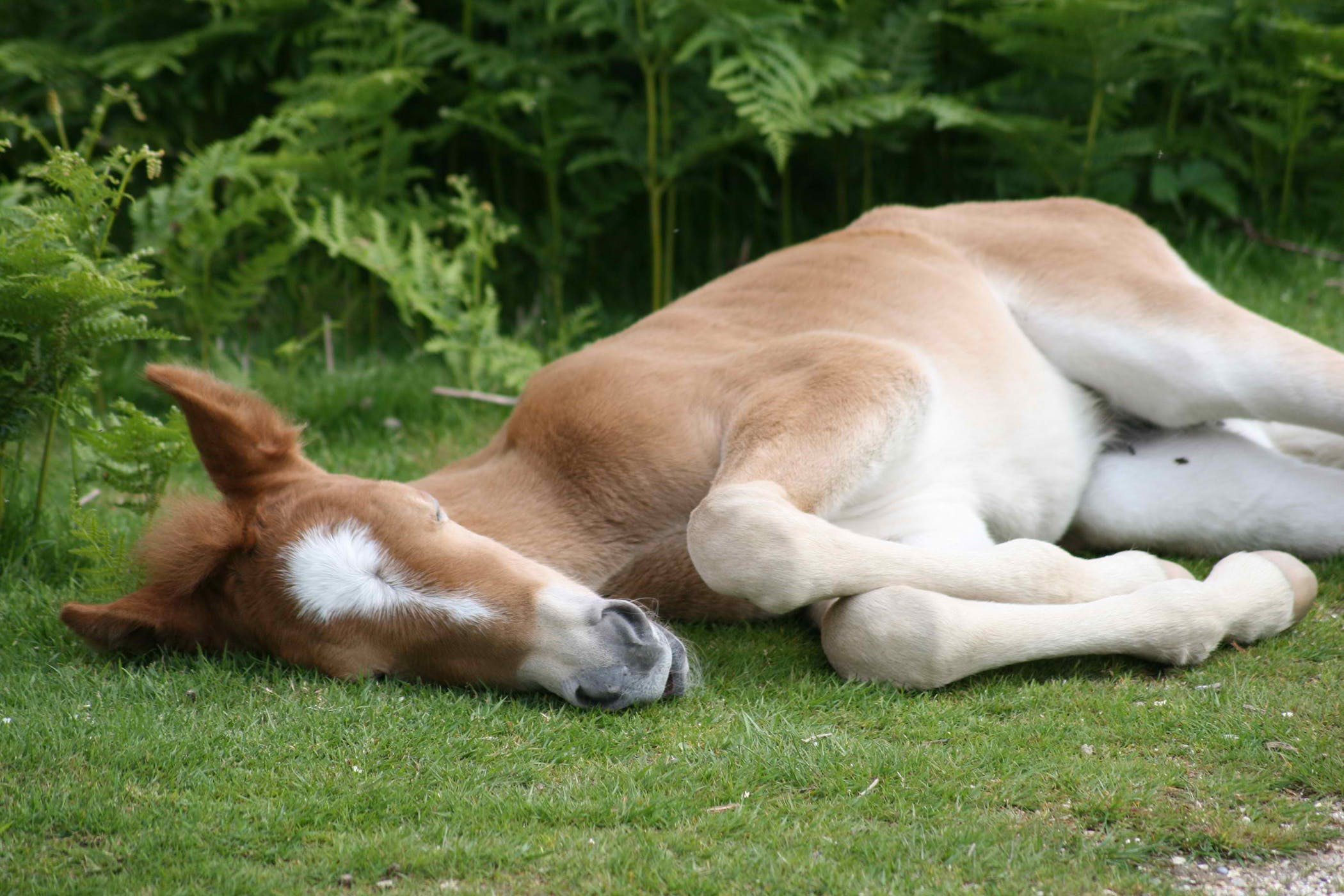 Weight Loss in Horses - Symptoms, Causes, Diagnosis ...