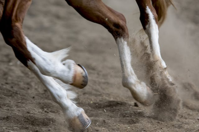 Windgalls in Horses - Symptoms, Causes, Diagnosis, Treatment, Recovery, Management, Cost