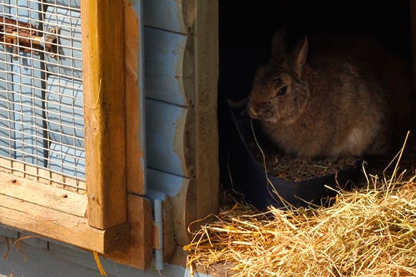 Blood in the Urine in Rabbits - Symptoms, Causes, Diagnosis, Treatment, Recovery, Management, Cost