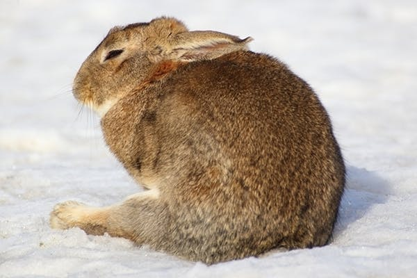 Decreased Movement of the Gastric Muscles in Rabbits - Symptoms, Causes, Diagnosis, Treatment, Recovery, Management, Cost