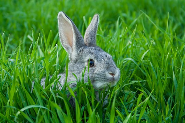 Degenerative Joint Disease in Rabbits - Symptoms, Causes, Diagnosis, Treatment, Recovery, Management, Cost