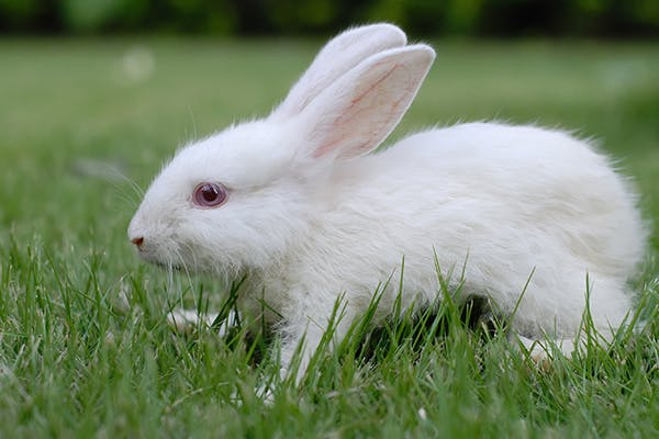 Kidney Failure in Rabbits - Symptoms, Causes, Diagnosis, Treatment, Recovery, Management, Cost