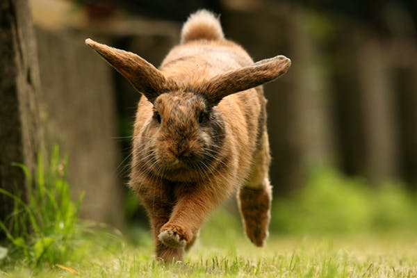 Lump Under the Skin in Rabbits - Symptoms, Causes, Diagnosis