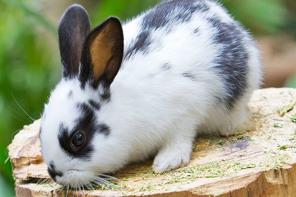 Lung Tumors and Lung Cancers in Rabbits - Symptoms, Causes, Diagnosis, Treatment, Recovery, Management, Cost