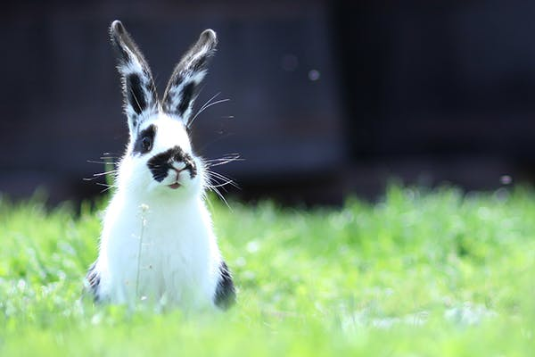 Vaginal Discharge in Rabbits - Symptoms, Causes, Diagnosis, Treatment, Recovery, Management, Cost