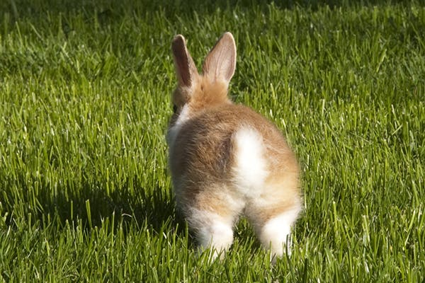 Weakness in Rabbits - Symptoms, Causes, Diagnosis, Treatment, Recovery, Management, Cost