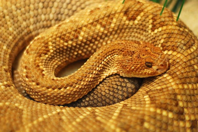 Adenovirus Infection in Snakes - Symptoms, Causes, Diagnosis, Treatment, Recovery, Management, Cost