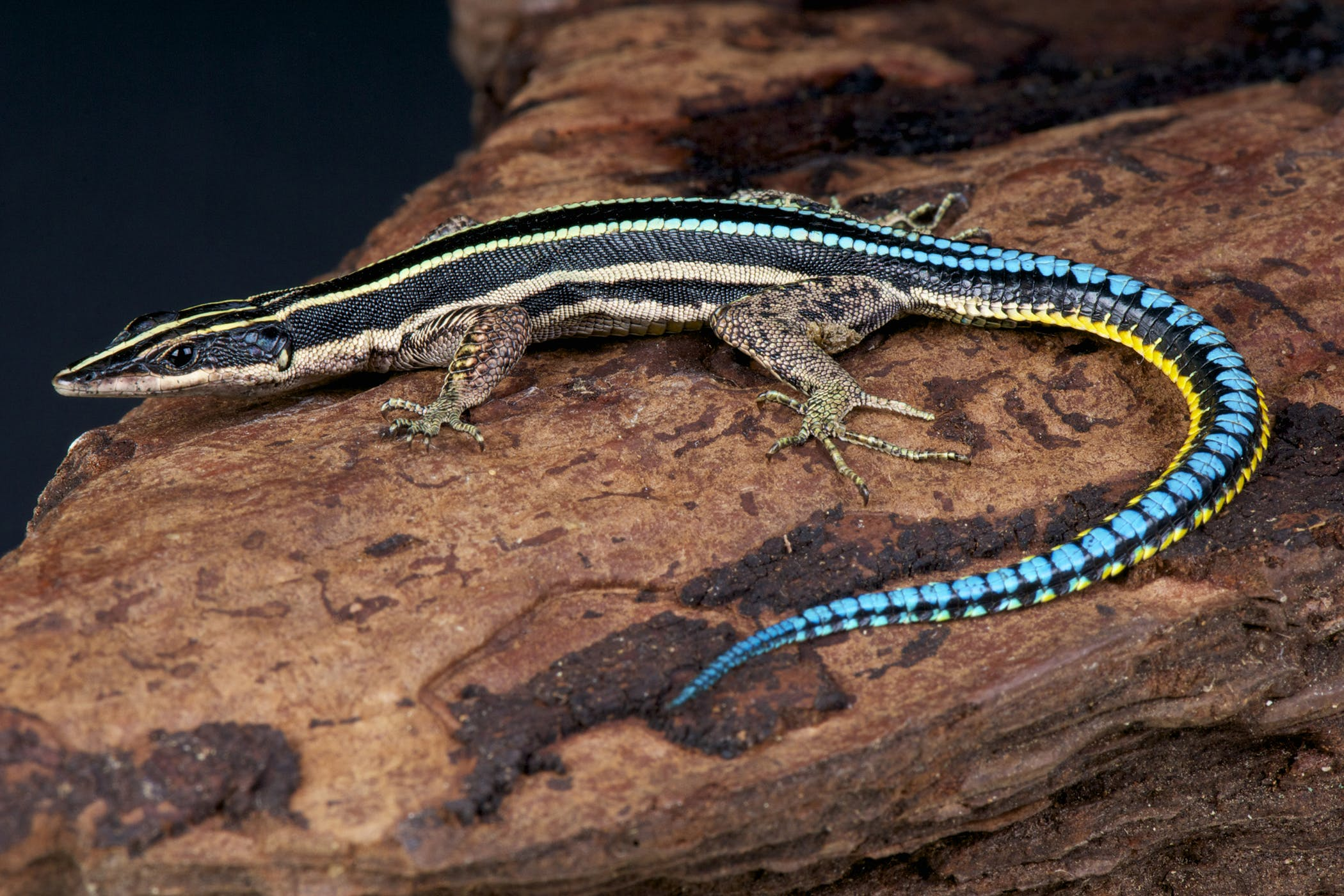Nematodes In Reptiles Symptoms Causes Diagnosis