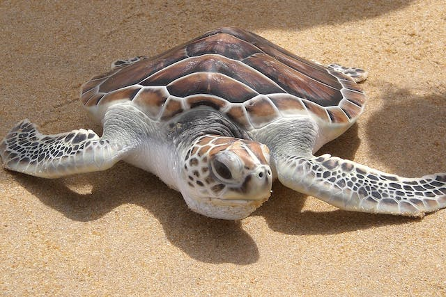 Parasites in Turtles - Symptoms, Causes, Diagnosis, Treatment, Recovery, Management, Cost