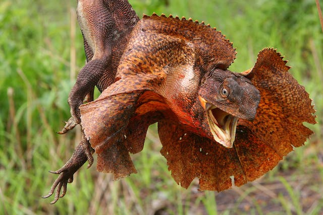 Tapeworms in Lizards - Symptoms, Causes, Diagnosis, Treatment, Recovery, Management, Cost