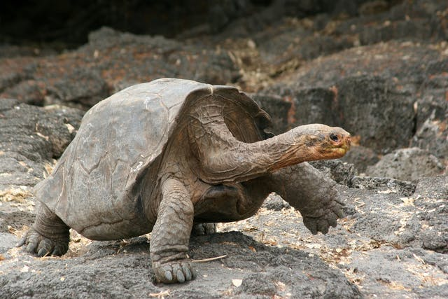 Ulcerative Shell Disease in Turtles - Symptoms, Causes, Diagnosis, Treatment, Recovery, Management, Cost