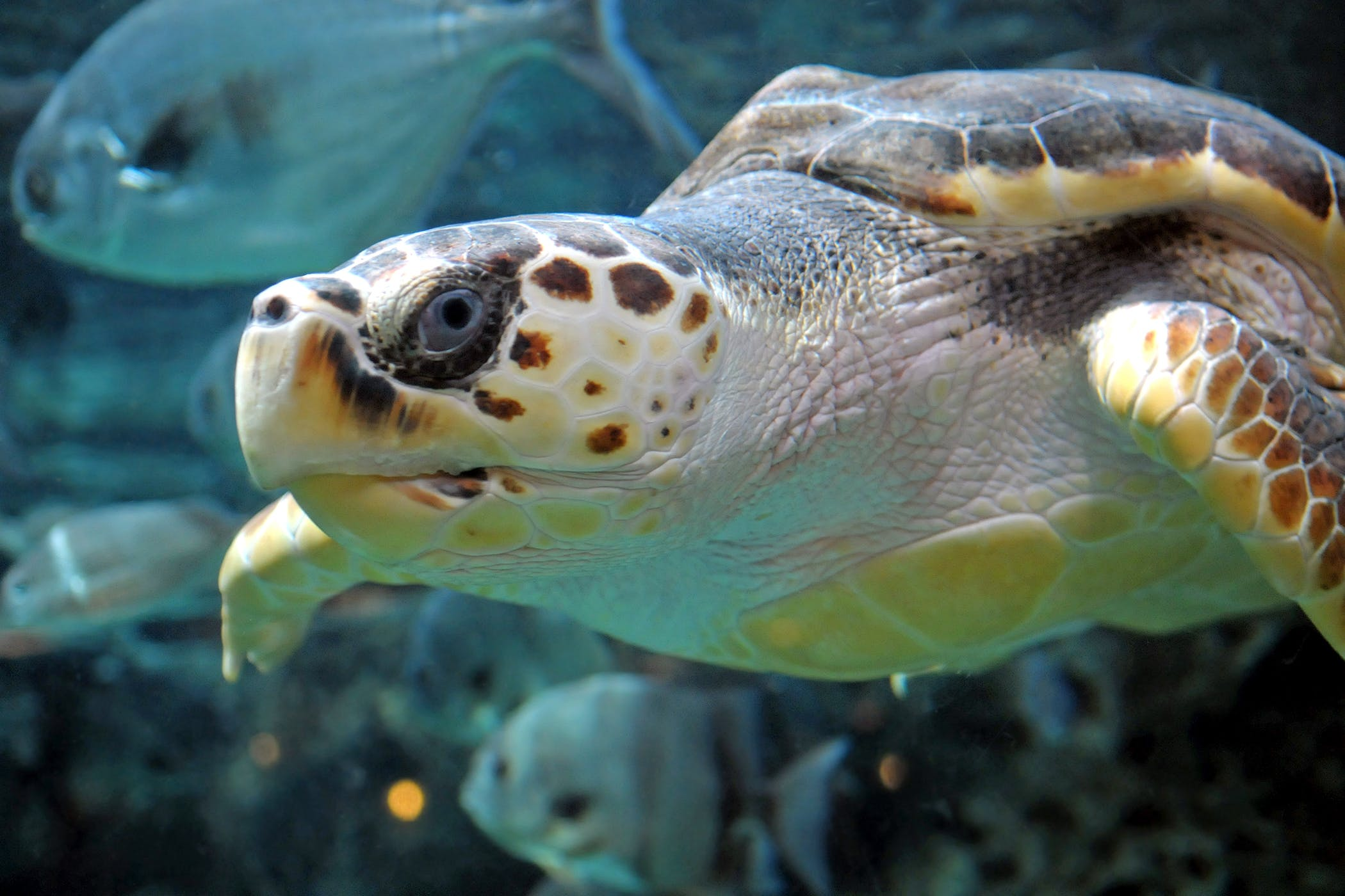 Diseases of red-eared turtles: symptoms and treatment (photo) 55