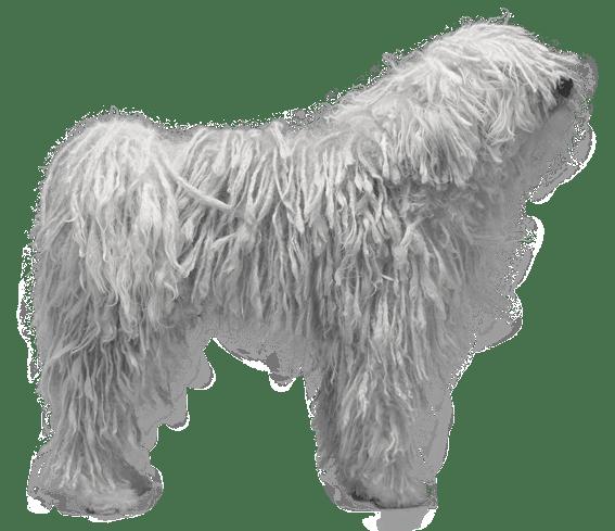 Komondor - Dog Breed Health, History, Appearance ...