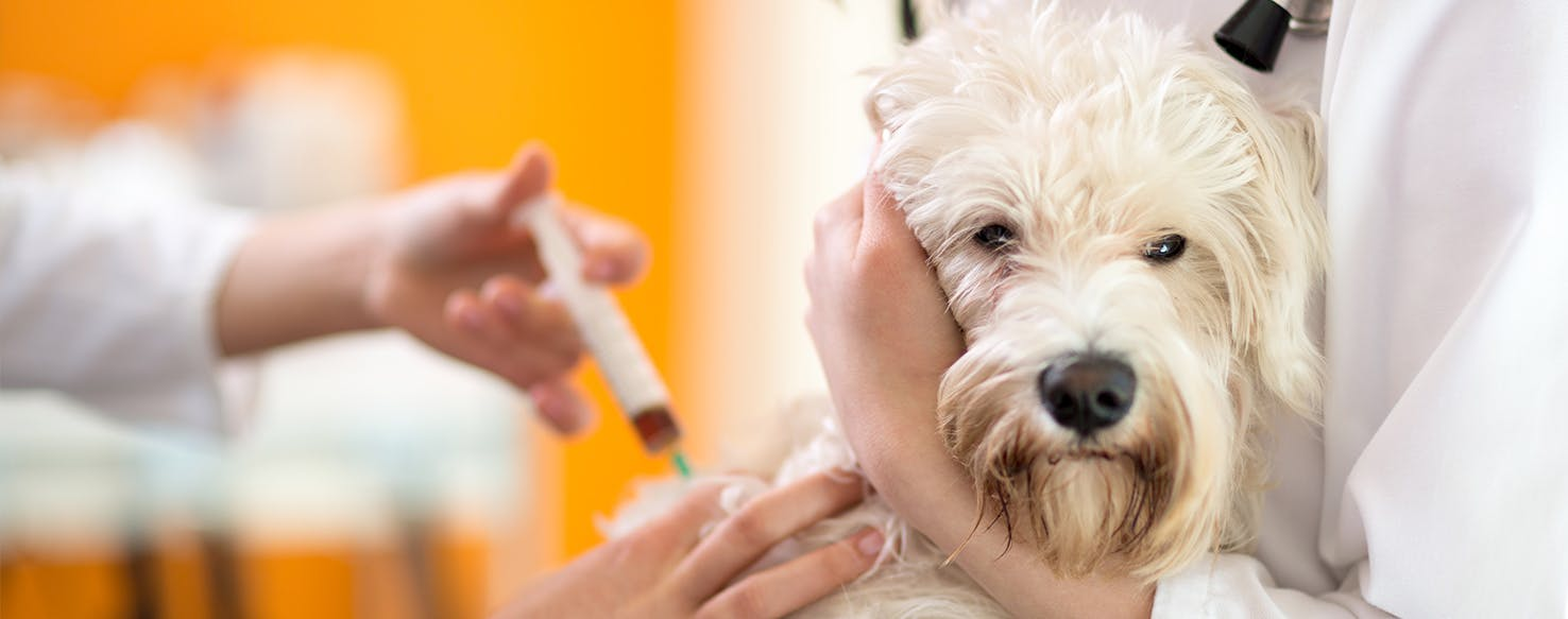 Can Dogs Get Cortisone Shots for Arthritis?