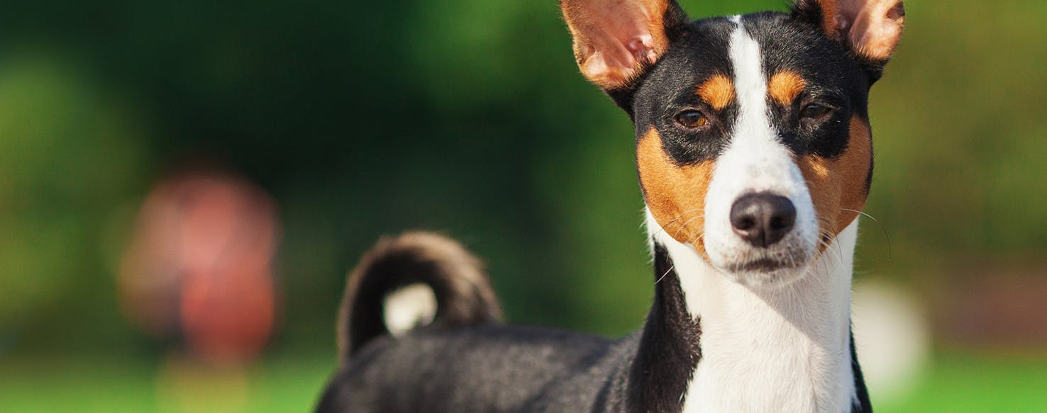 Can Dogs Have Eating Disorders