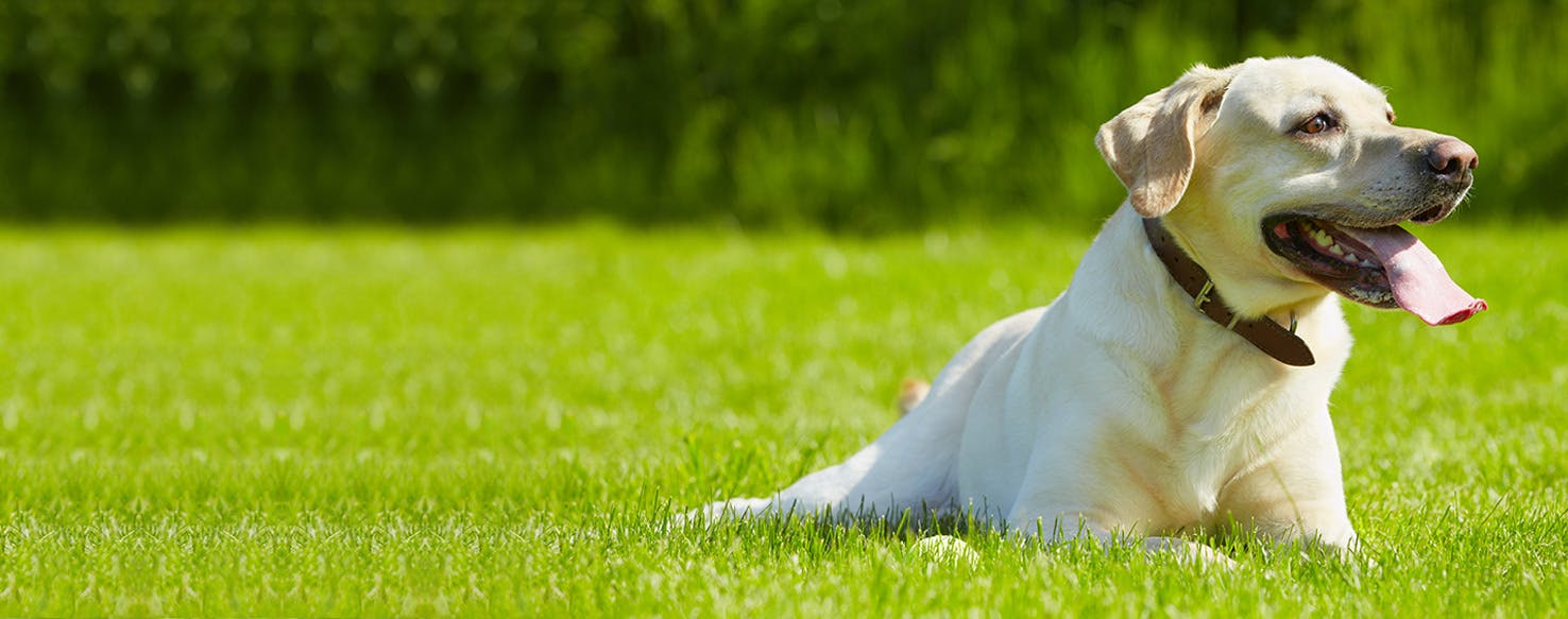 wellness-can-dogs-get-heat-exhaustion-hero-image
