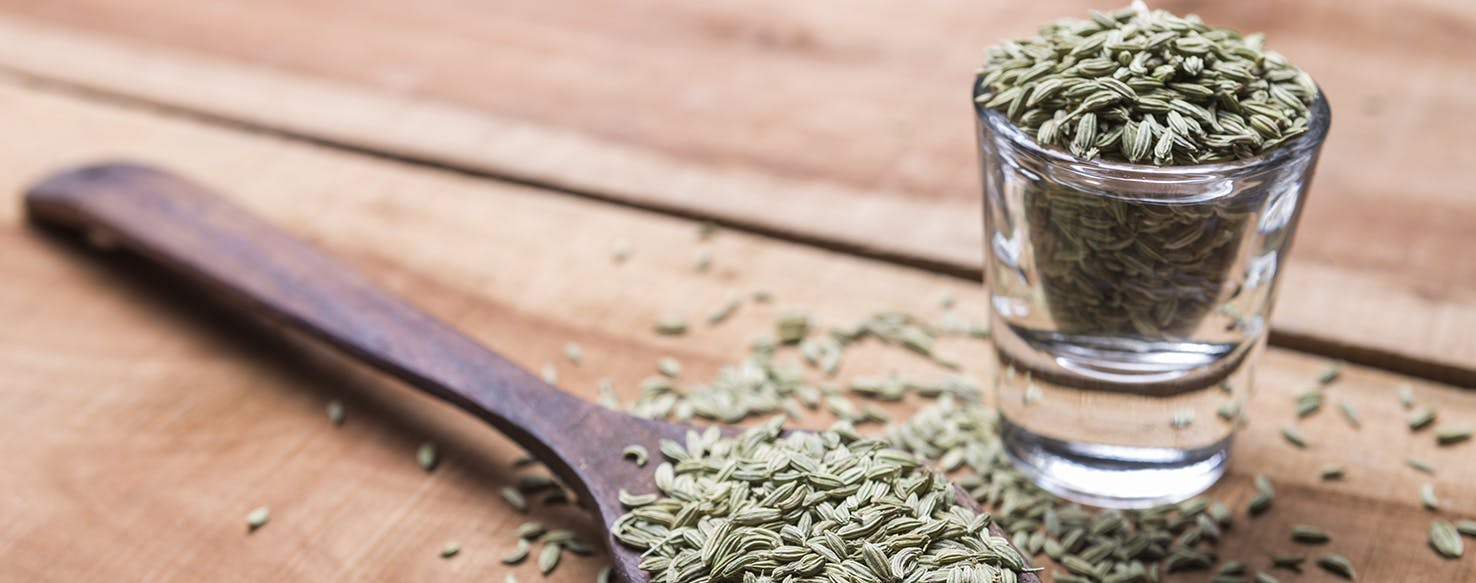 wellness-can-i-add-fennel-to-my-pets-food-hero-image