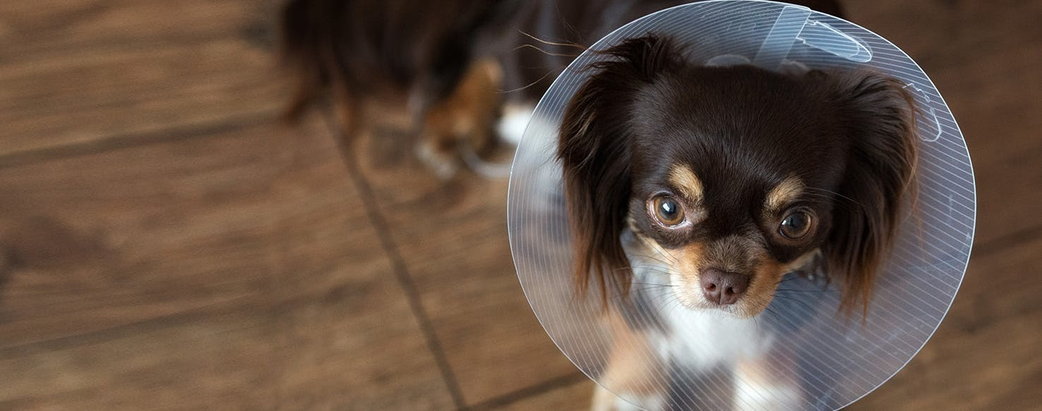 wellness-does-my-dog-really-need-an-e-collar-hero-image