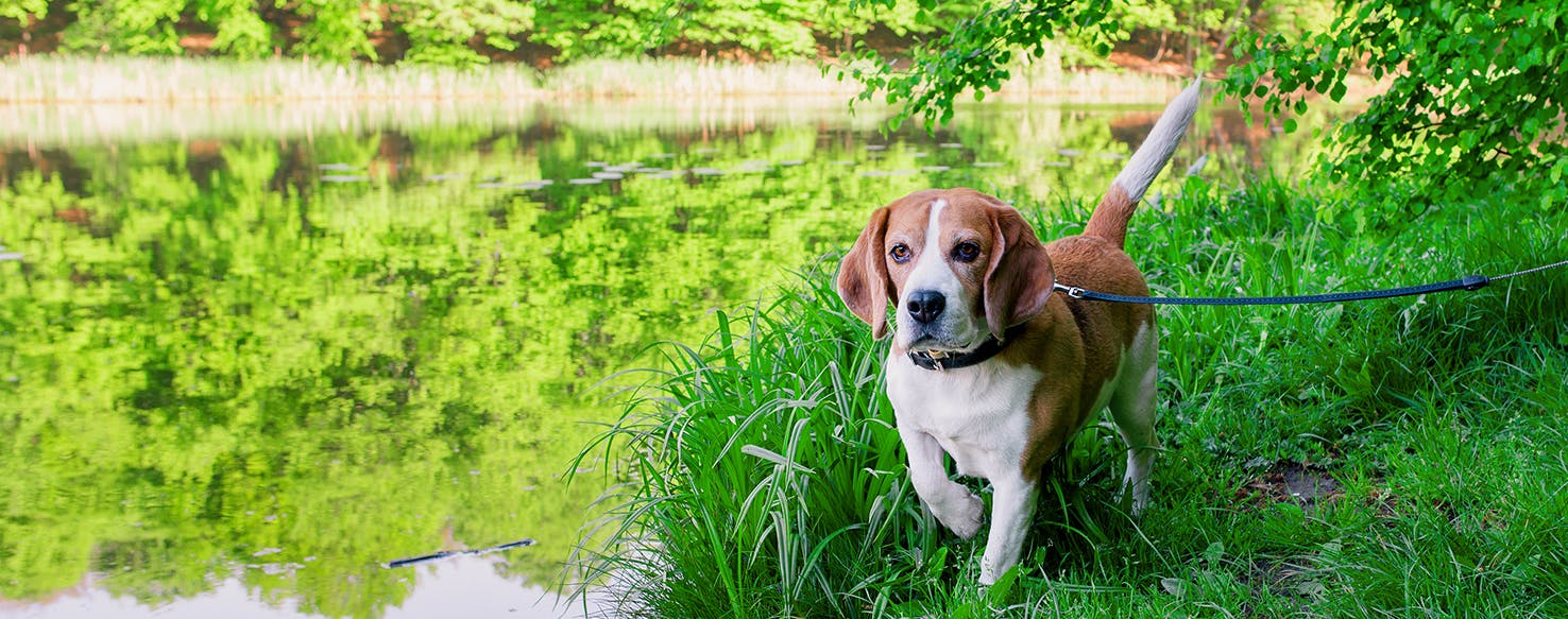 Natural Relief For Constipation In Dogs