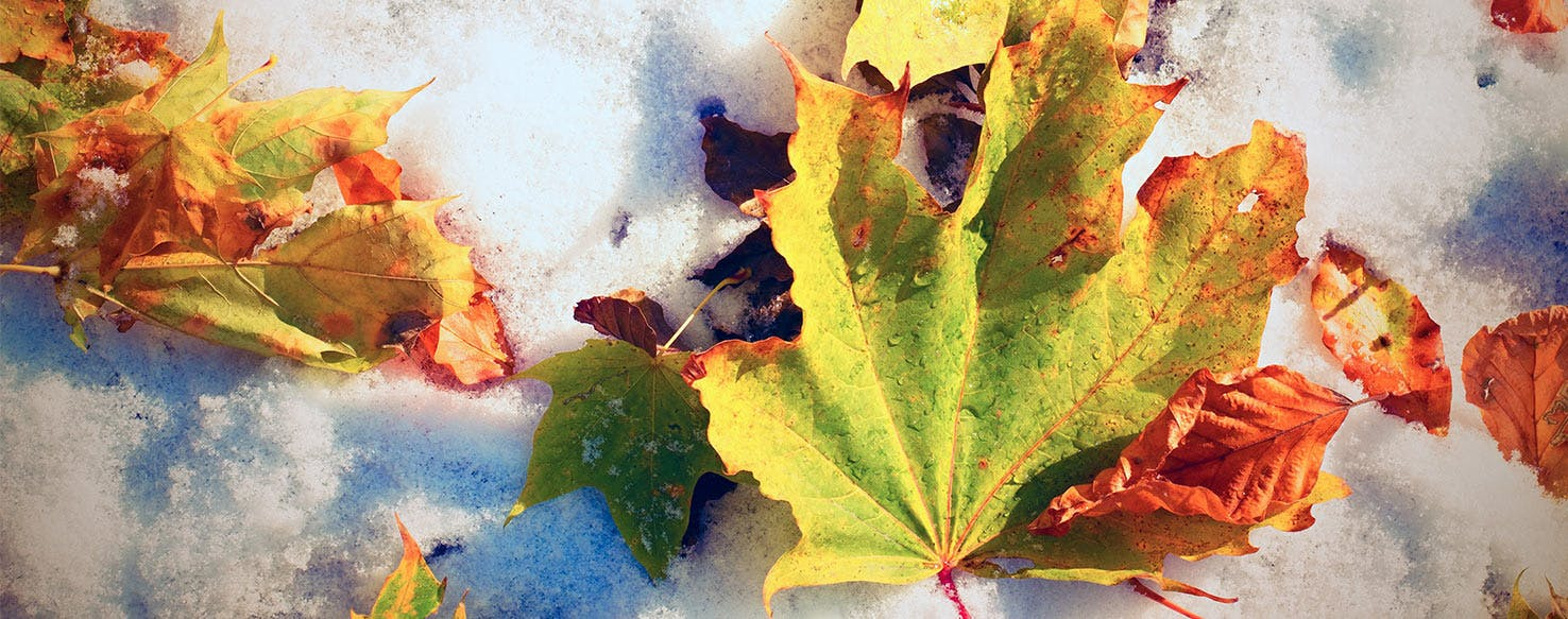 wellness-fall-and-winter-plants-that-may-pose-hidden-health-risks-to-your-dog-hero-image