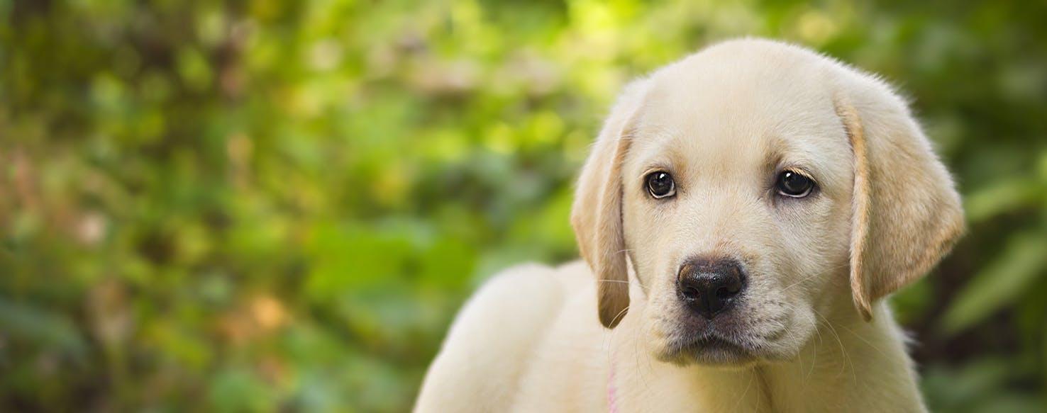 wellness-financing-puppy-hero-image