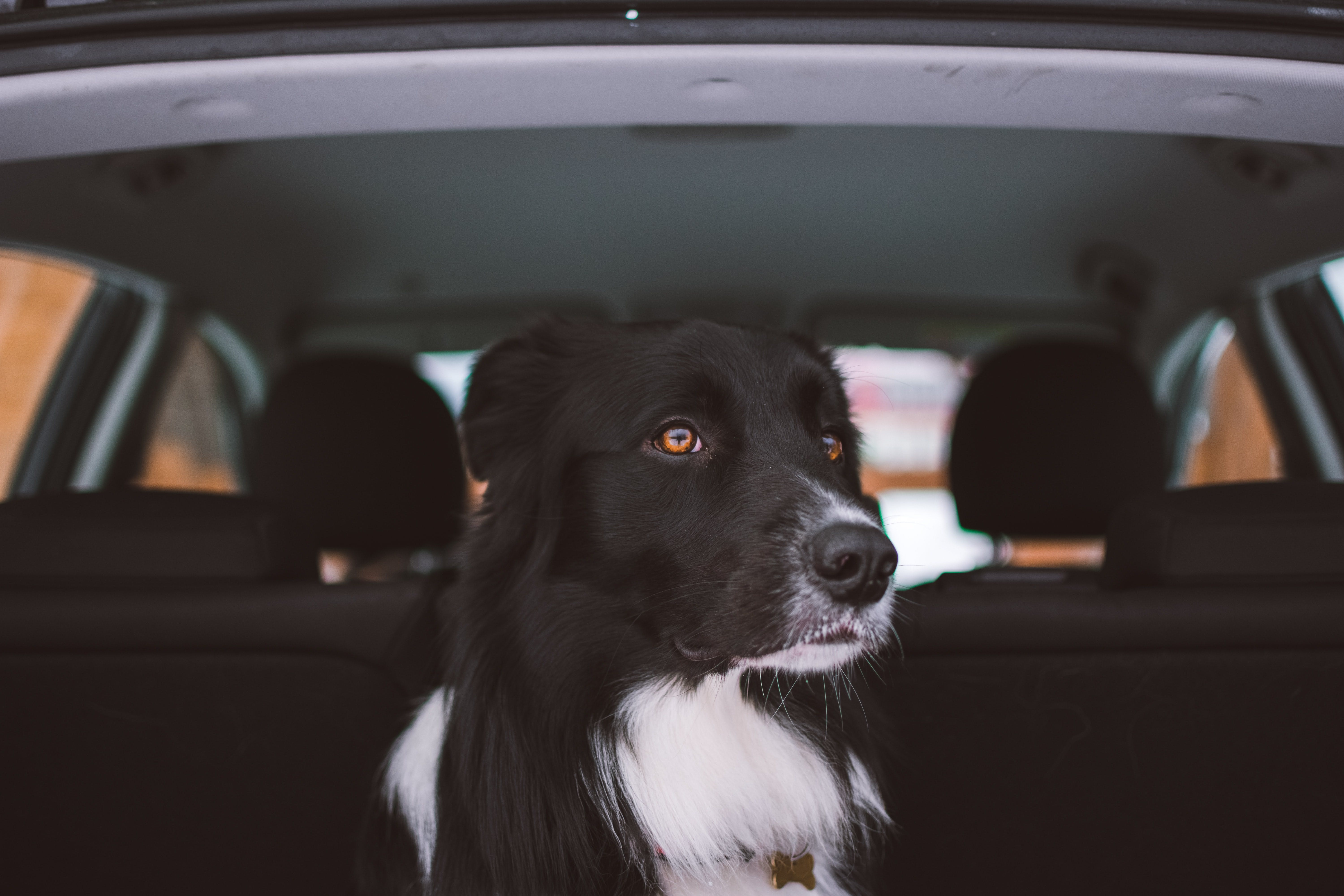 wellness-how-often-should-you-stop-with-a-dog-in-the-car-hero-image