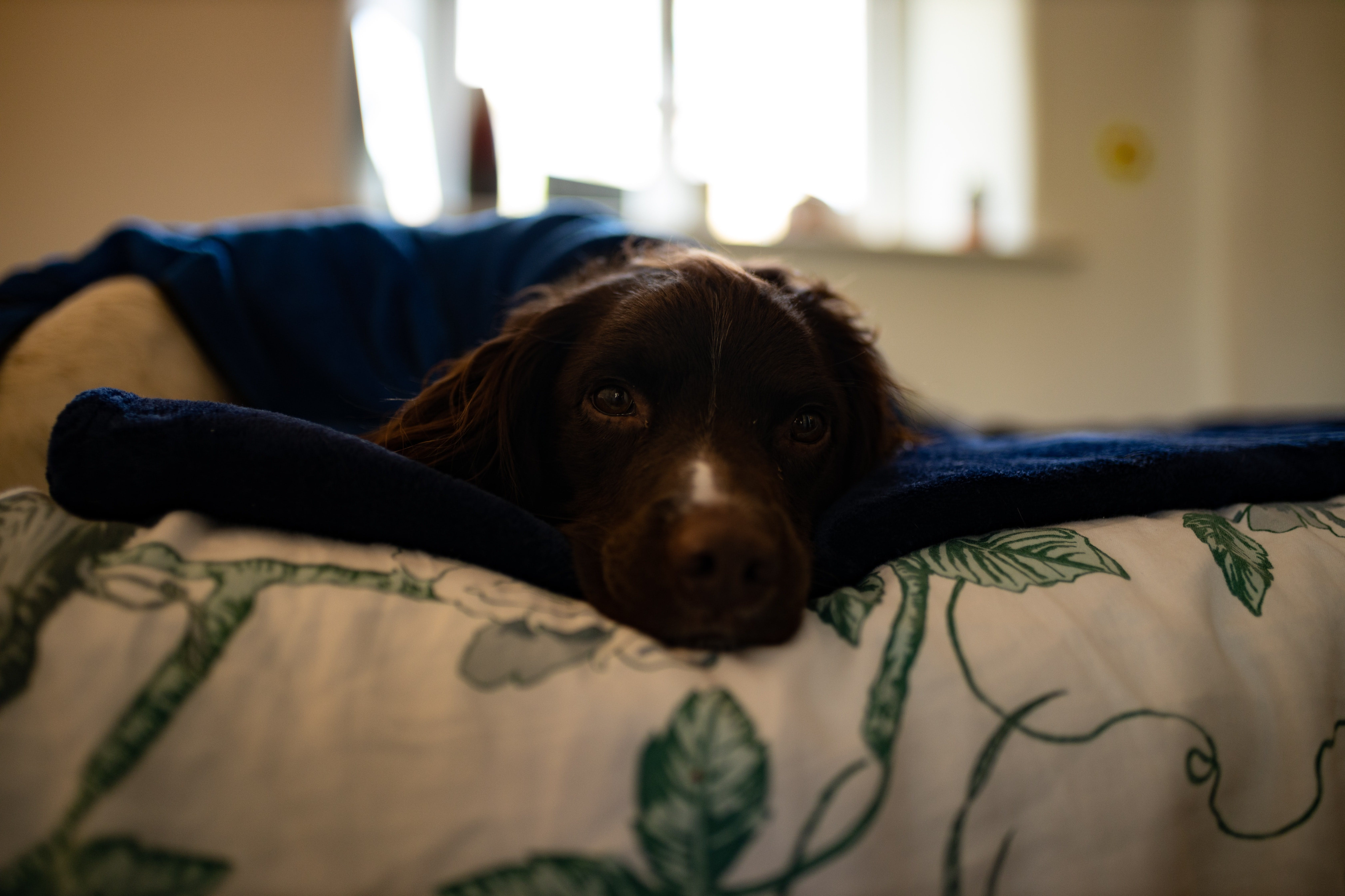 wellness-can-dogs-be-allergic-to-blankets-hero-image