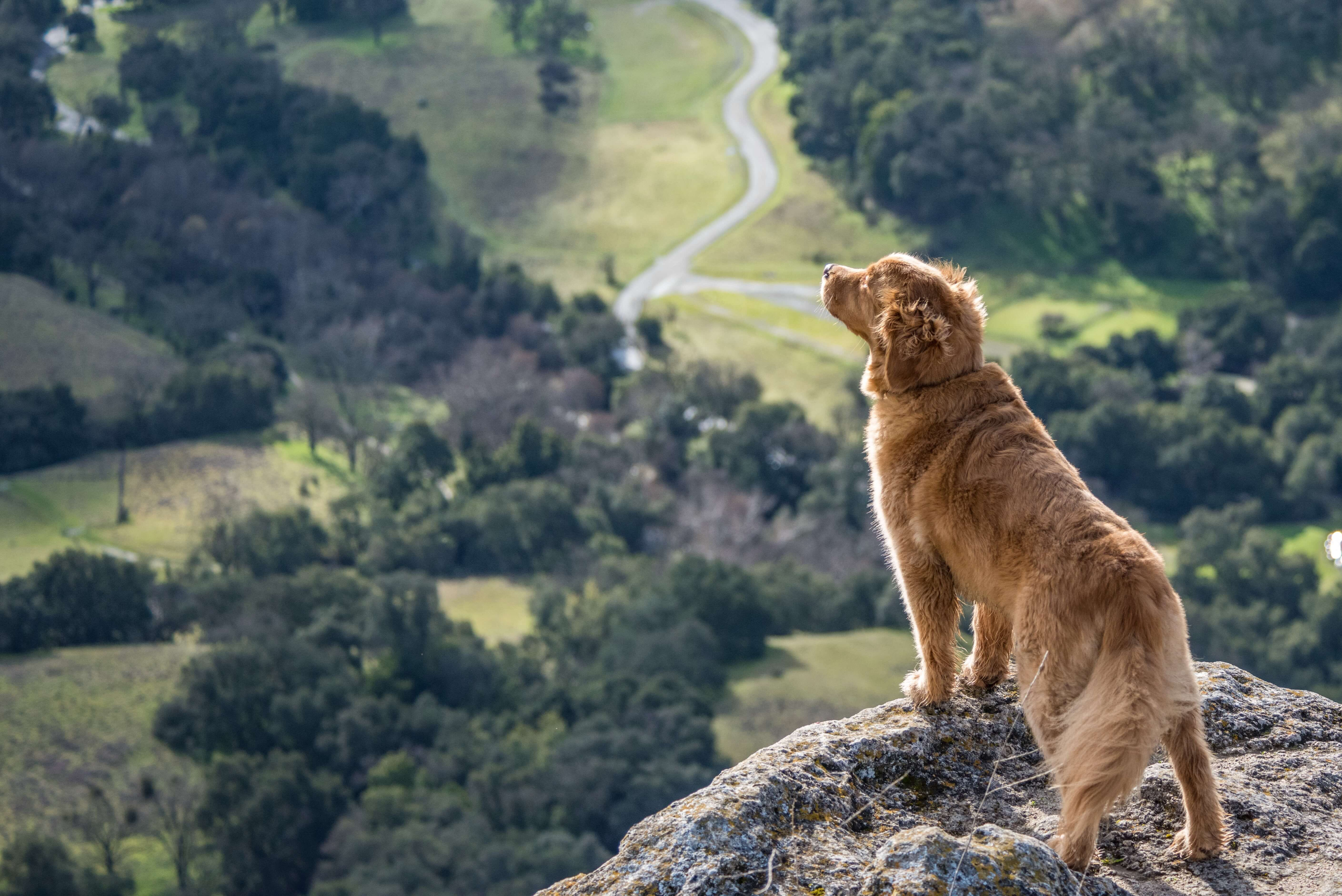 wellness-7-scariest-things-that-can-happen-to-pups-on-vacation-hero-image