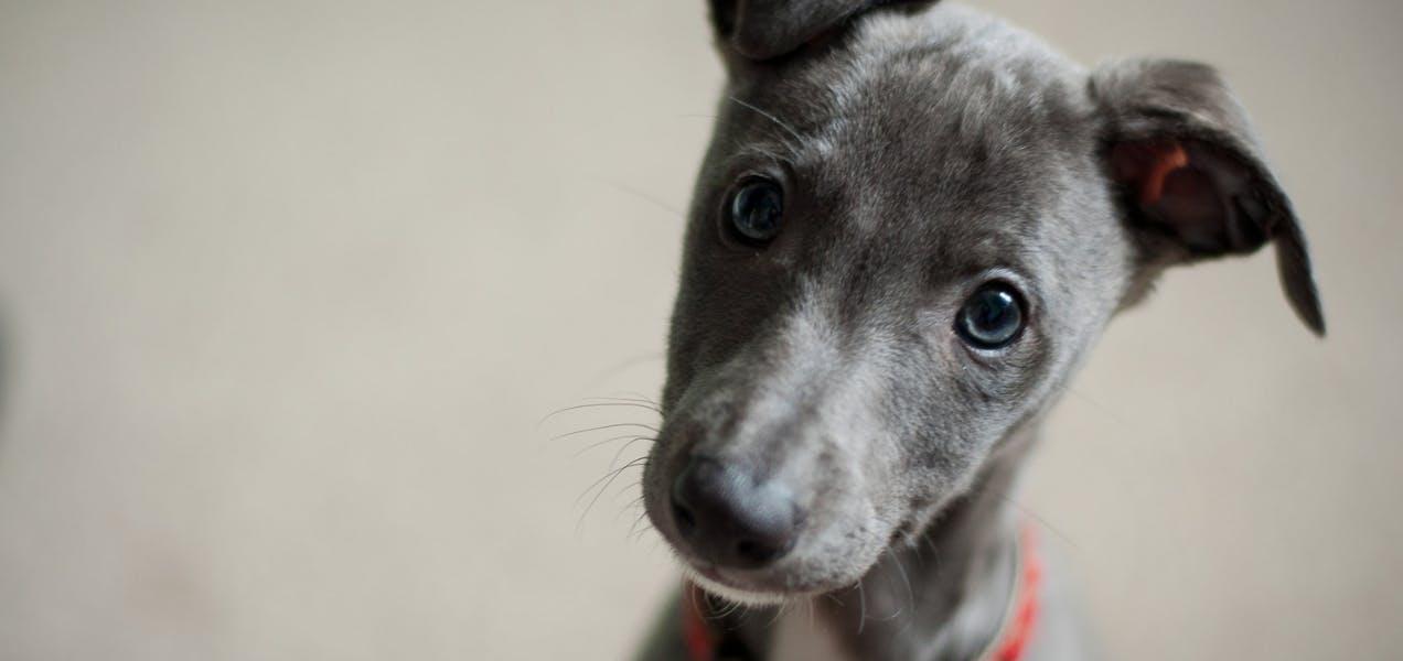 wellness-5-common-poor-dog-behaviors-ranked-hero-image