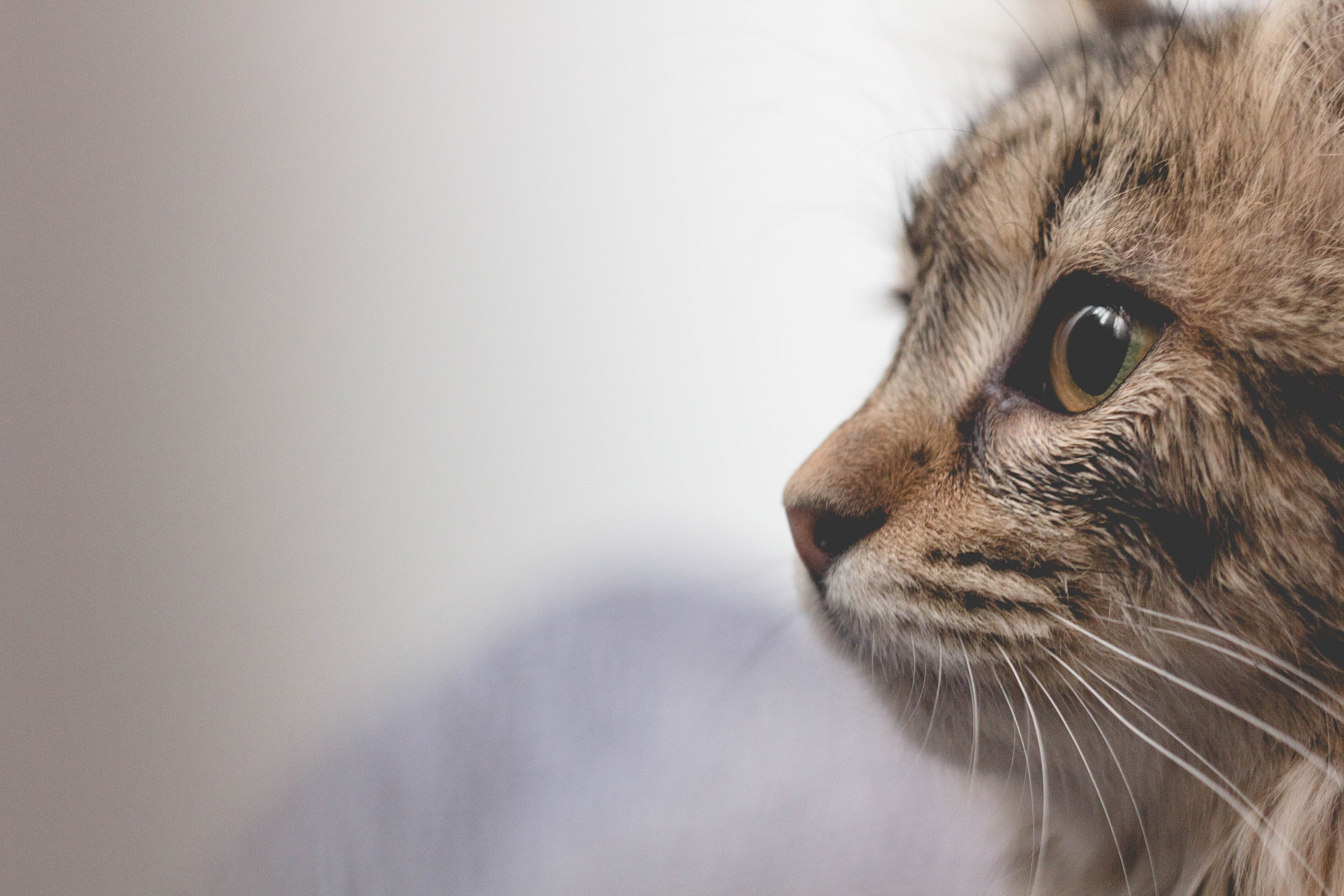 wellness-5-common-eye-problems-in-elderly-cats-hero-image