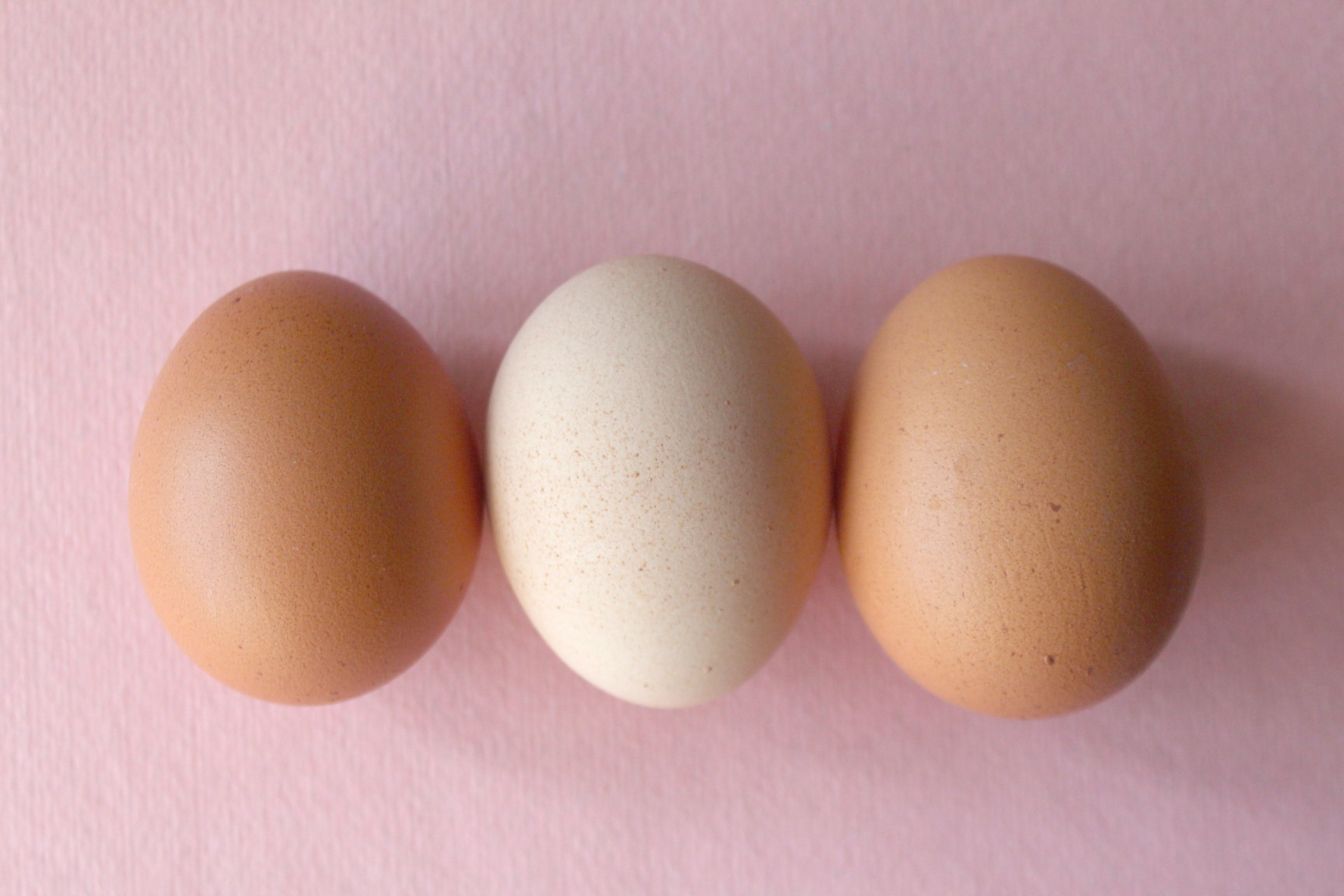 wellness-can-dogs-eat-raw-eggs-hero-image