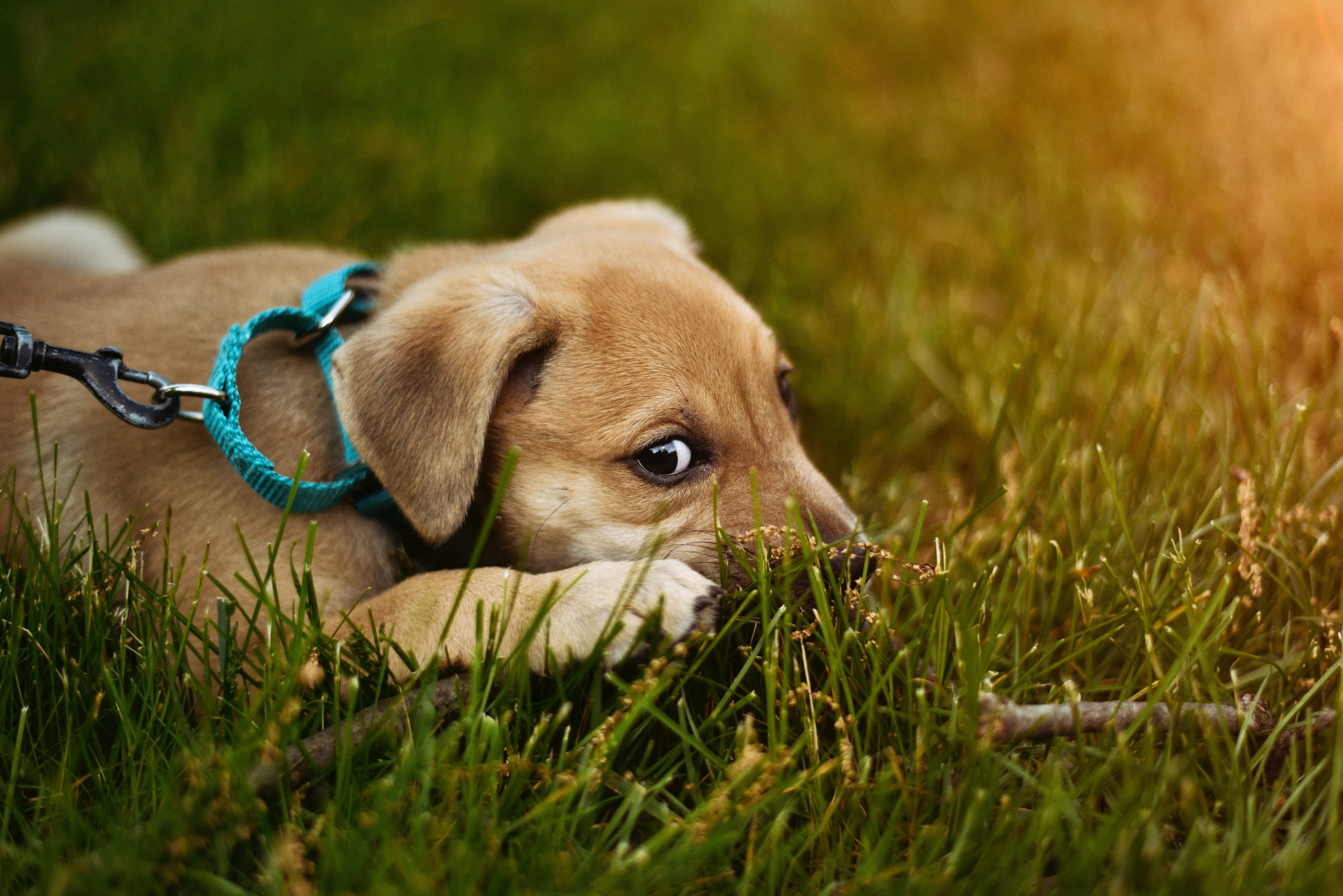 wellness-anxiety-wraps-for-dogs-what-you-need-to-know-hero-image