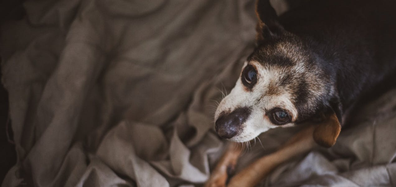 wellness-how-often-should-senior-dogs-visit-the-vet-hero-image
