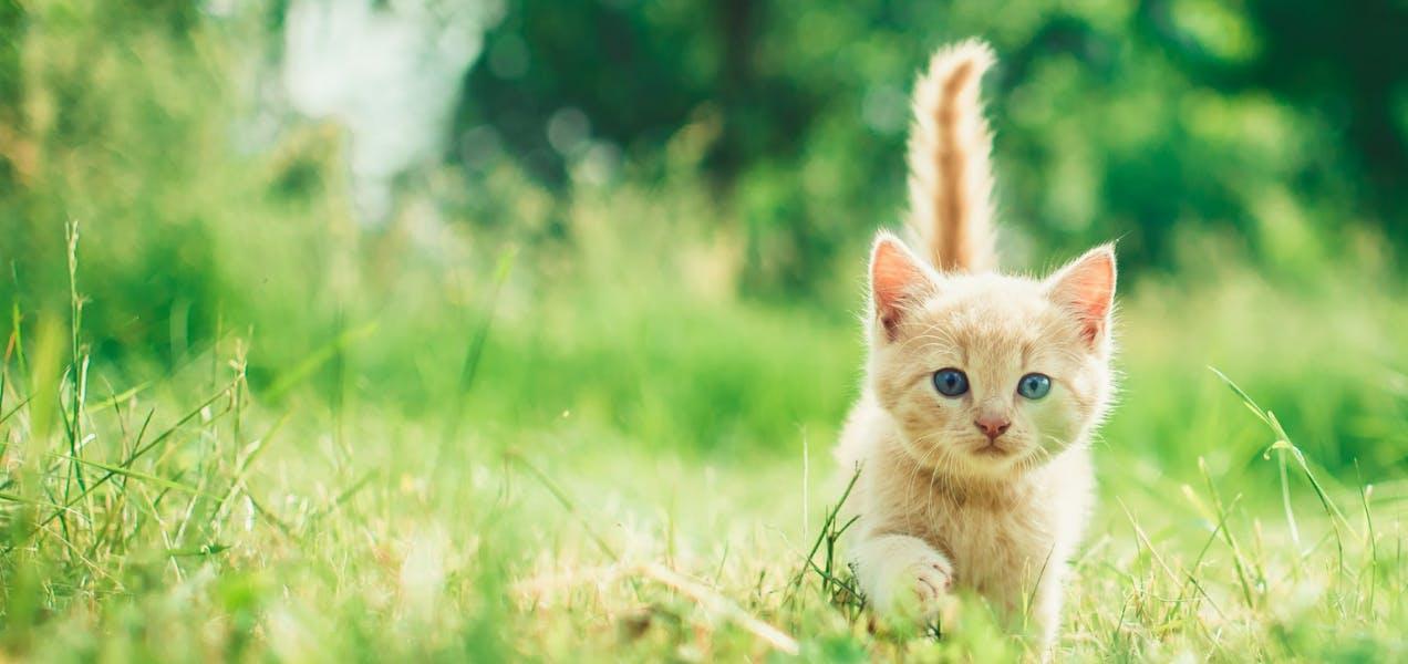 wellness-how-fast-can-cats-run-hero-image