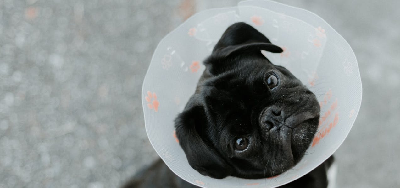 wellness-whats-the-average-vet-bill-cost-for-small-dogs-hero-image