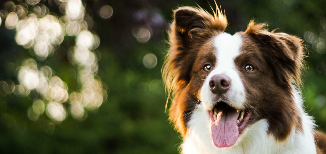 wellness-whats-the-average-vet-bill-cost-for-medium-size-dogs-hero-image