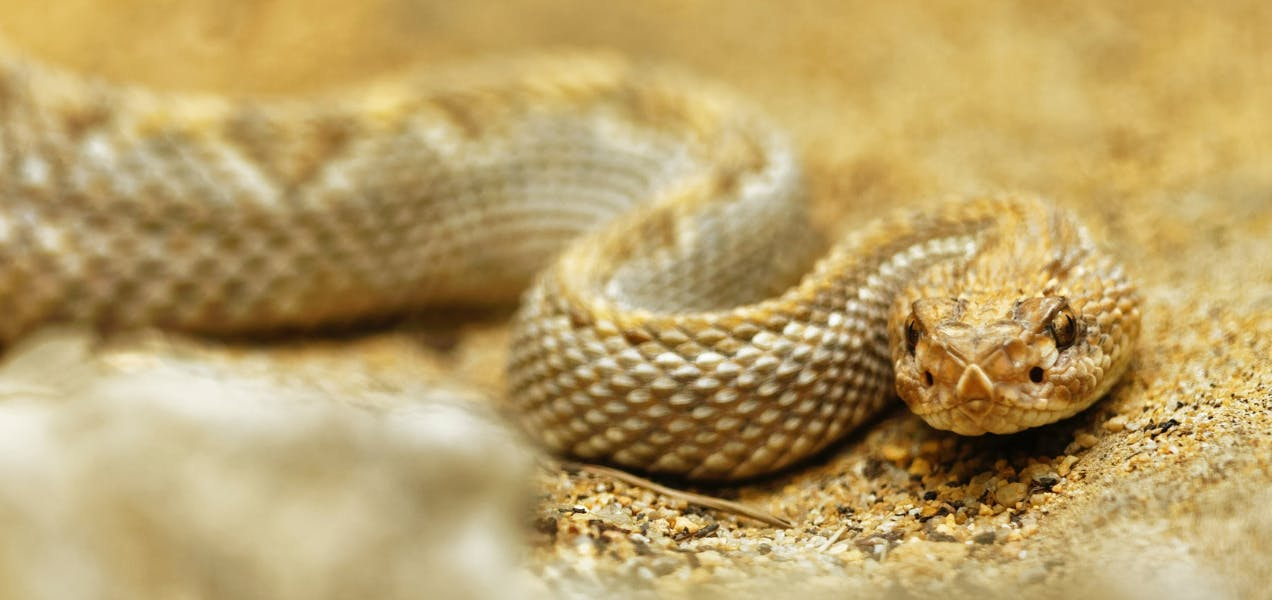 wellness-how-to-protect-your-dog-from-venomous-snakes-hero-image