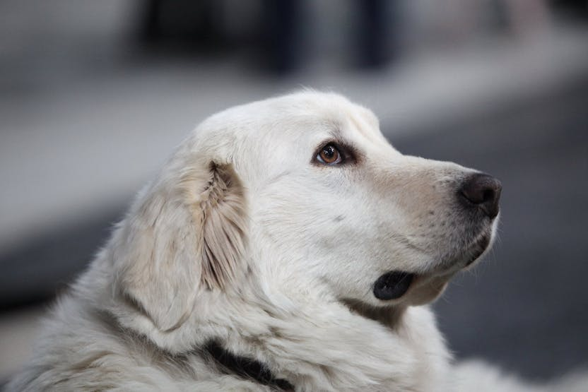 wellness-how-often-should-large-dogs-go-to-the-vet-hero-image