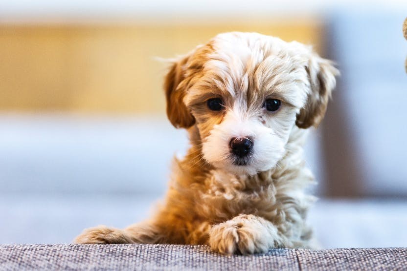 wellness-7-ways-pet-health-insurance-helps-your-puppys-wellbeing-hero-image