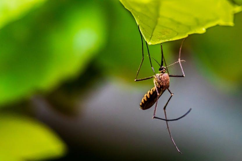 wellness-4-safe-dog-friendly-mosquito-repellent-sprays-hero-image