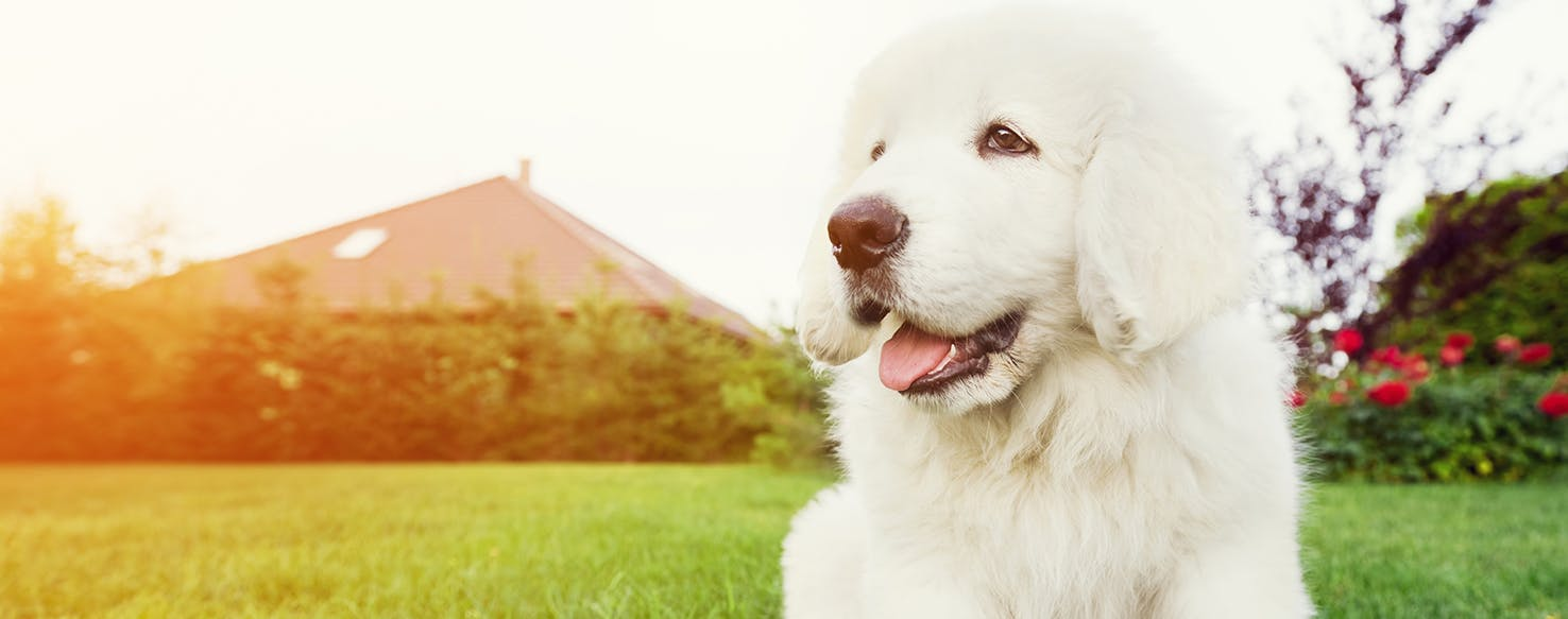 dog care how to choose a great pet sitter