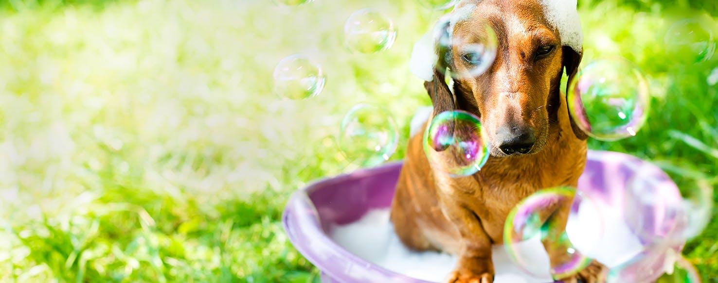 wellness-how-to-bathe-your-dog-hero-image