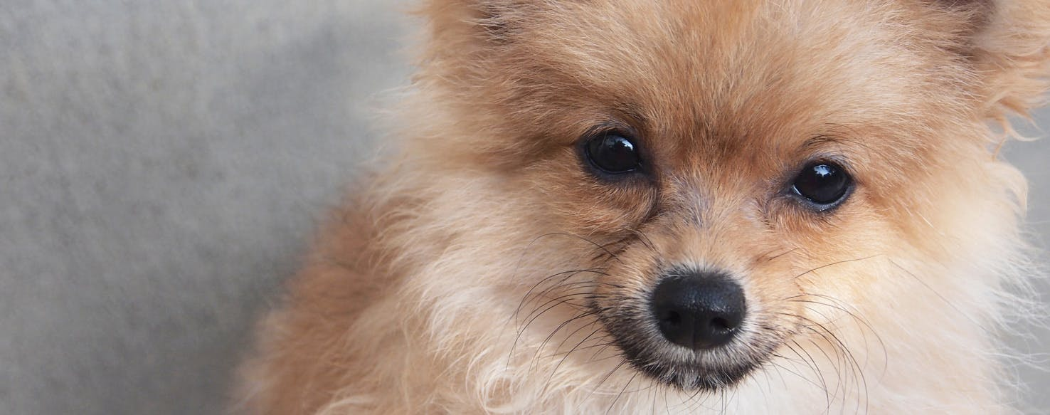 How to Prevent Dog Eye Boogers