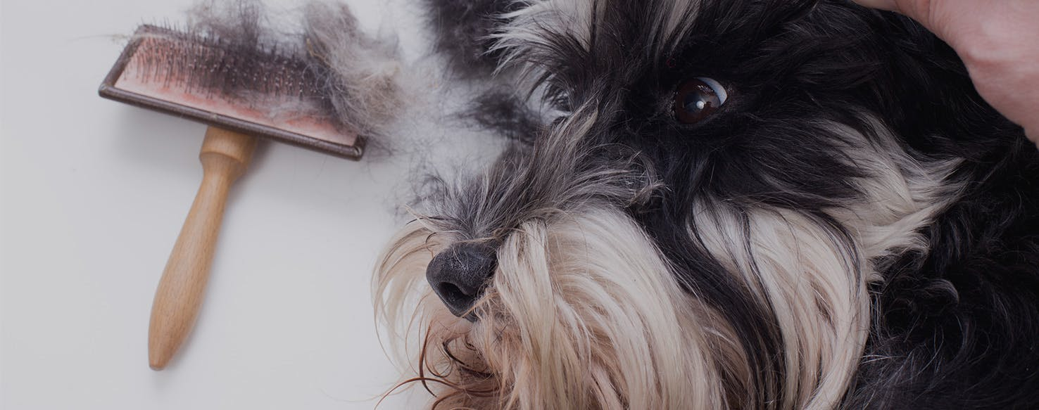 wellness-how-to-prevent-your-dogs-hair-from-matting-hero-image