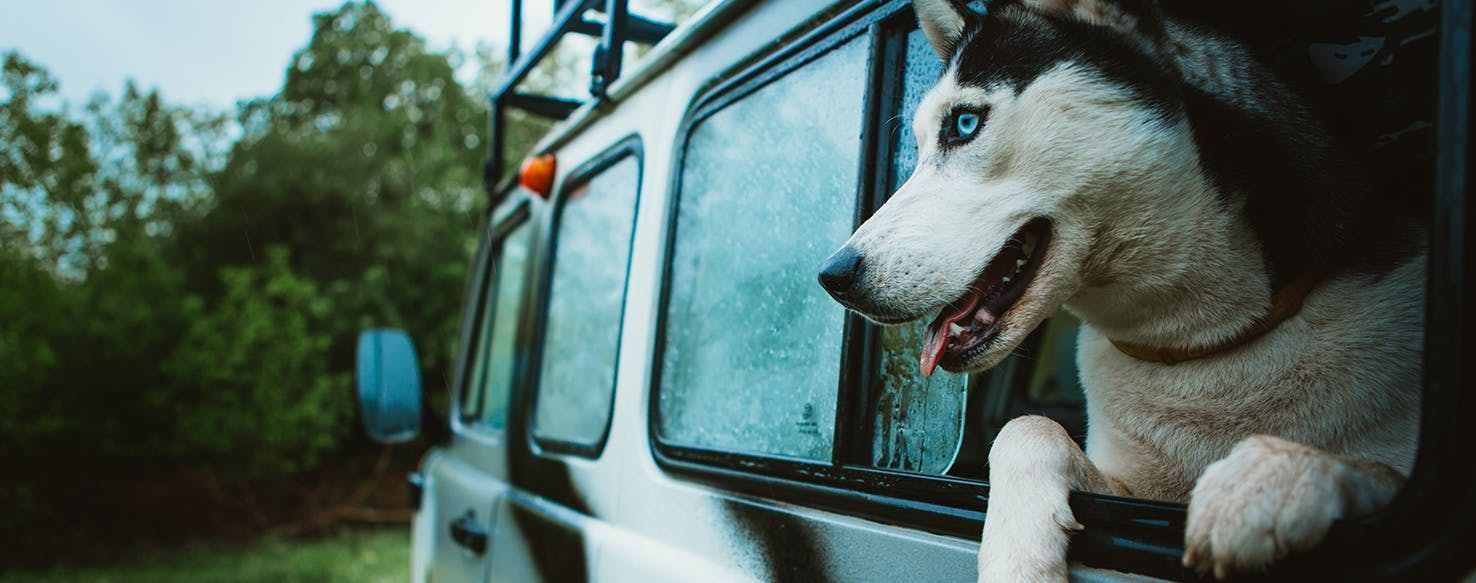 wellness-natural-remedies-for-motion-sickness-in-dogs-hero-image